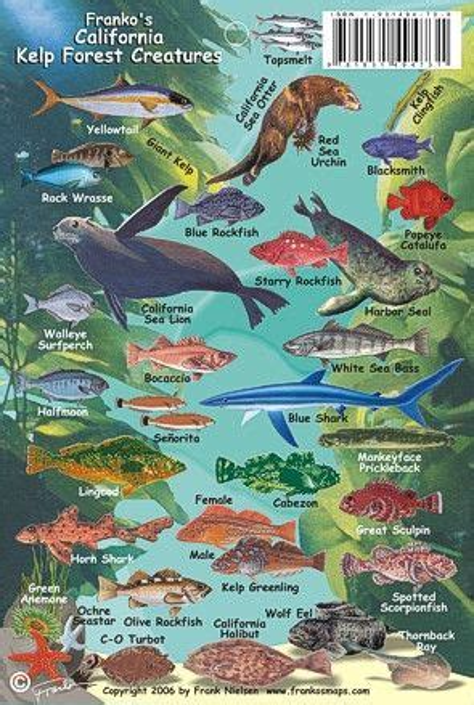 california kelp forest creatures identification guide