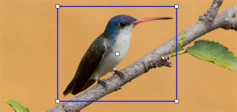 photo id merlin bird id instant bird identification