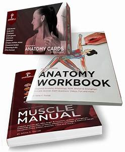 Muscle Manual  Anatomy Workbook  And Flash Cards