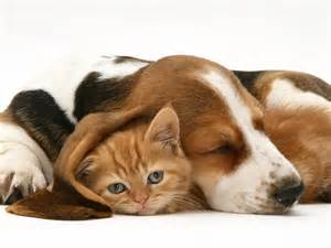 hound and gatos cat food dogs humans give times more than a cat