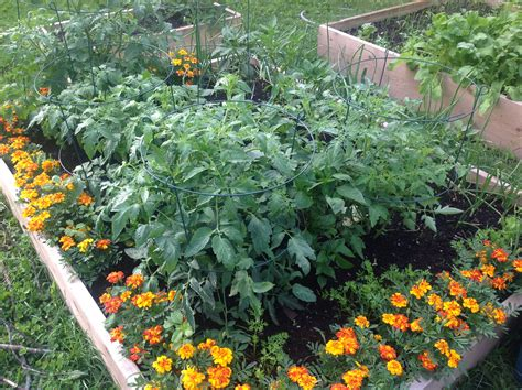 timeless gardens  tos  dos organic  gmo