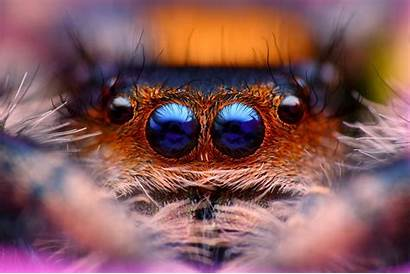 Spider Macro Jumping Animals Close Nature Insect