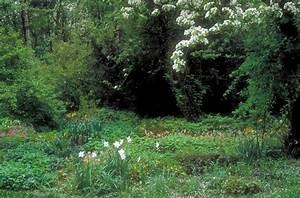 Gartengestaltung Unter Bäumen : garten garten gr ne im schatten unter hohen b umen de ~ Yasmunasinghe.com Haus und Dekorationen