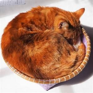 Wie Fange Ich Eine Katze : hochmut kommt vor dem fall oder wie man eine katze entwurmt tiergezwitscher ~ Markanthonyermac.com Haus und Dekorationen