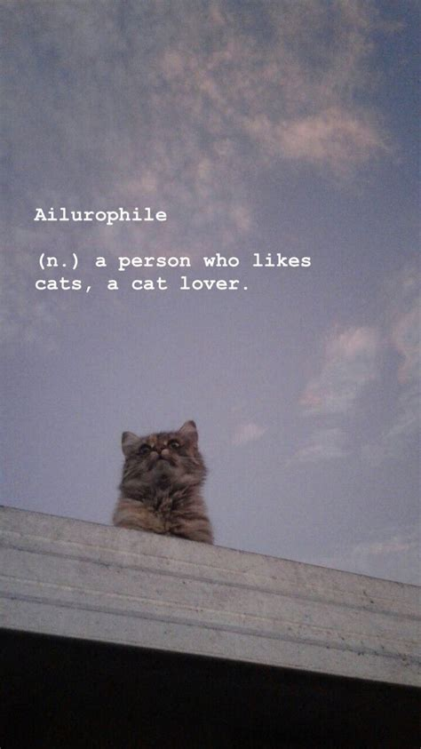aesthetic background cat lover ig atcaitlinnhannah cute