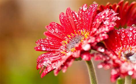 Top 10 Beautiful Flower Wallpapers Hd