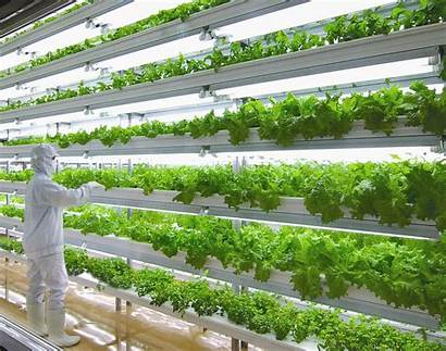 Hydroponic Systems Vertical Aeroponic Farms Specializing Urban