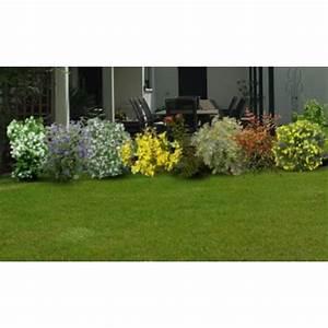 Haie Pas Cher Qui Pousse Vite : kit haie basse fleurie hauteur 1m lot de 8 arbustes ~ Premium-room.com Idées de Décoration