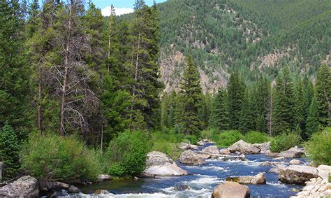 Comments Oppose Coal-mining Loophole on Colorado Forest