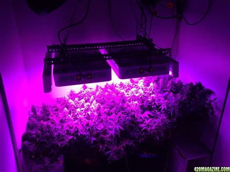 used led grow lights best led grow light for under 1000 page 8