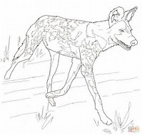 hd wallpapers african wild dog coloring pages