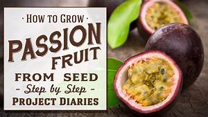 How To  Grow Passion Fruit From Seed  A Complete Step By