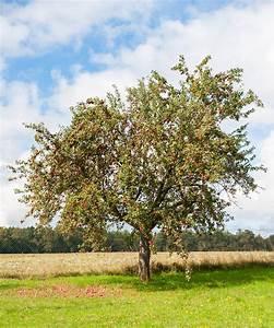Arbre A Fruit : les bases de la taille des arbres fruitiers blog oleomac ~ Melissatoandfro.com Idées de Décoration