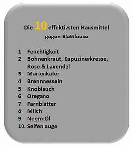 Schmierseife Gegen Blattläuse : blattl use bek mpfen was tun 10 effektive hausmittel ~ Lizthompson.info Haus und Dekorationen
