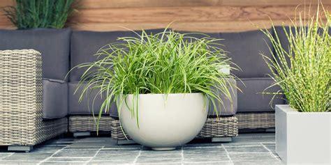 Steinbeet Pflanzen Winterhart by Ziergr 228 Ser F 252 R Einen Sch 246 Nen Garten Dehner