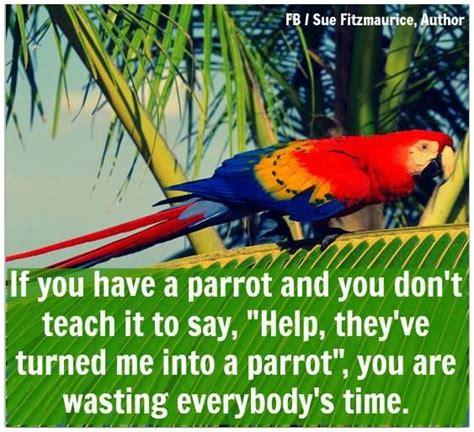 Parrot Meme - 116 best bird memes and quotes images on pinterest pet birds parakeets and parrots