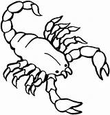 Coloring Pages Scorpion Preschool Printable Animals Worksheets Painting sketch template