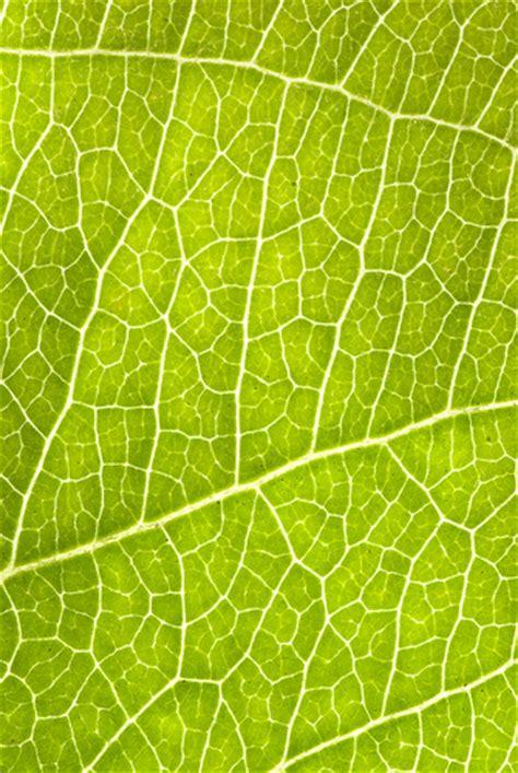 leaf cells flickr photo sharing