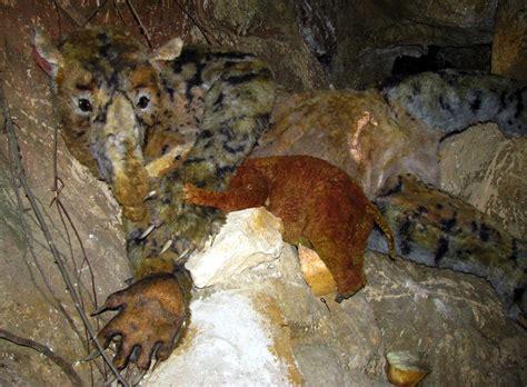 palorchestes marsupial azael horse naracoorte caves donsmaps