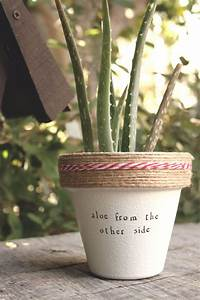 "4"" Aloe From the Other Side » Aloe Vera Cute Succulent"