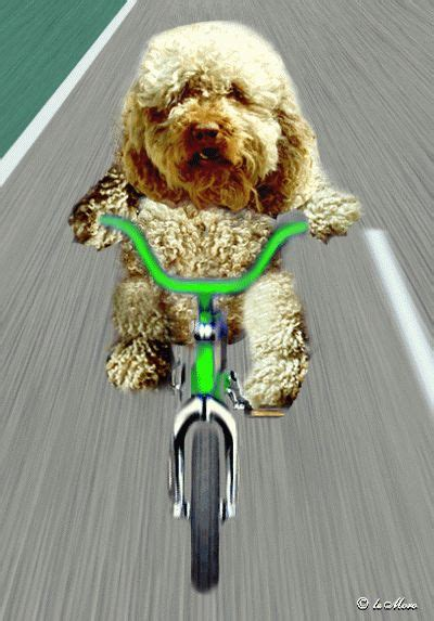 myemoticone gif humour chien humour chien gif photos humour et avatar