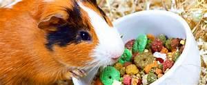 Die ultimative Liste mit 145 Dingen die Hunde essen