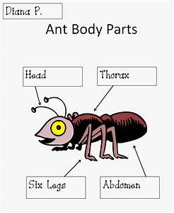 For My Ant Unit