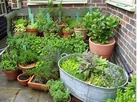 potted herb garden Ernie and I: Rodmell Open Gardens