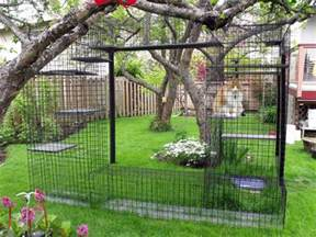 cat outdoor enclosure pet talk in illinois environmental enrichment for cats