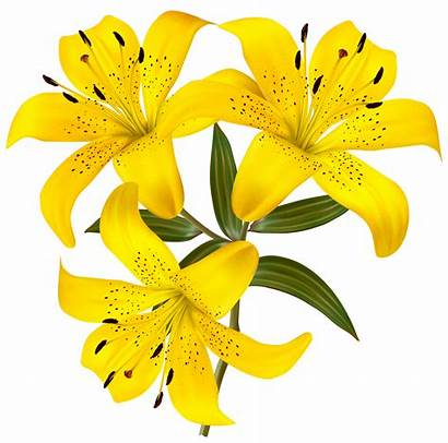 Yellow Lilies Clipart Lily Flower Tiger Transparent