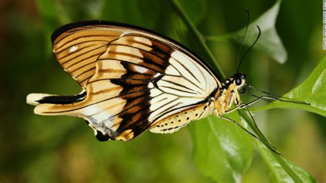 Butterfly Farmers Help Protect Threatened Forests Cnncom