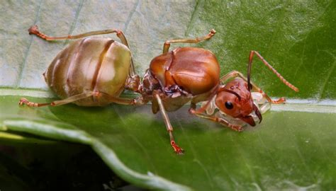 queen ant dies sciencing