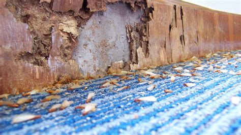 buy  home  termite damage bankrate