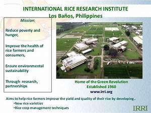 Ramil Mauleon: IRRI GALAXY: bioinformatics for rice scientists