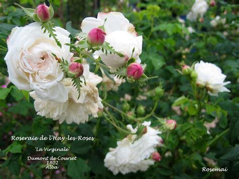 bureau de poste l hay les roses la roseraie du val de marne à l 39 hay les roses une