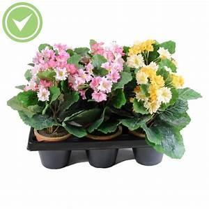Mini Plante Artificielle : hortensia mini pot en barquette de 6 plante artificielle en pot maison et fleurs ~ Teatrodelosmanantiales.com Idées de Décoration