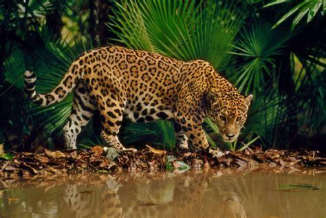 los mejores sitios  ver animales salvajes en libertad