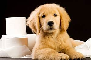 settling in your new puppy australian dog lover With dog bathroom training