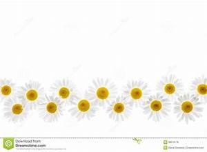 Daisy Flower Border Royalty Free Stock Image - Image: 38570176