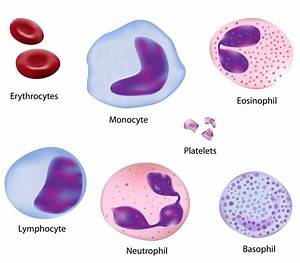 physical appearance of human red blood cells, white blood ...