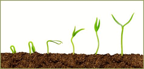 growing plants plant magical seeds in the soil of your mind live your nature