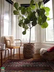 Große Zimmerpflanzen Pflegeleicht :  ~ Lizthompson.info Haus und Dekorationen