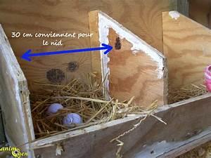 Nid Pour Poulailler : poulailler sol perchoirs nids liti re que choisir ~ Premium-room.com Idées de Décoration