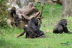 zoo münster bewertung