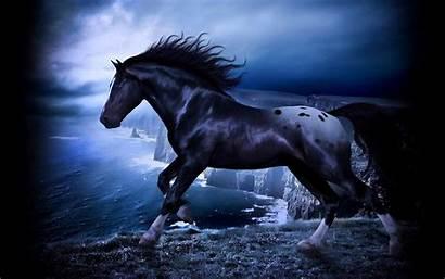 Wild Stallion Horse Dark Wallpapers Friesian Desktop