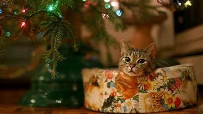 Cat Christmas Wallpapers Widescreen Wallpapertag Xiaomi