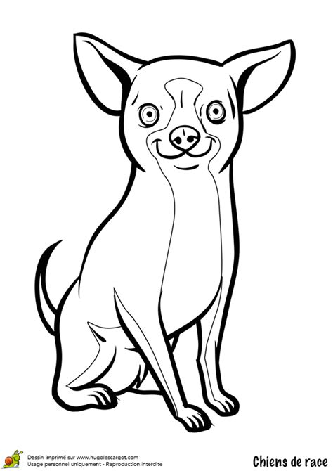 jeux de cuisine gateau gratuit coloriage chien chihuahua hugolescargot com