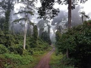 9 Days Danum Valley & Wildlife Package in Borneo