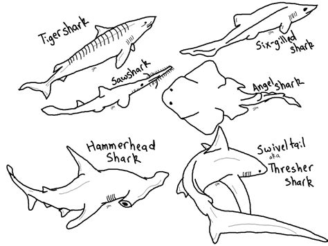 Hammerhead Shark Clipart Coloring Page