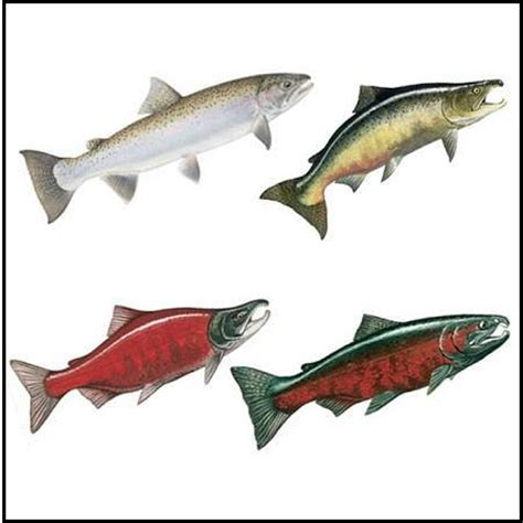 types of salmon fishing techniques 101
